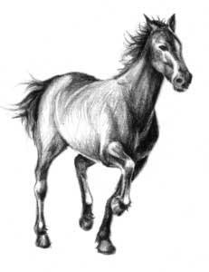 Татуировки коня лошади