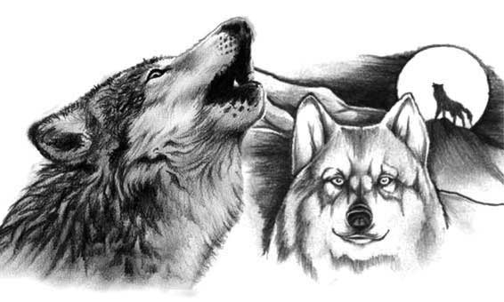 Волк воет на луну а другой волк