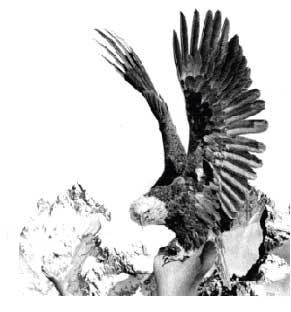 анимации ворона