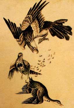 Татуировки орла фото, рисунки тату орел скачать